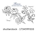 sketch floral botany collection.... | Shutterstock .eps vector #1734599333