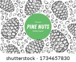 pine nuts hand drawn sketch.... | Shutterstock .eps vector #1734657830