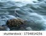 Lonely Heron  Standing On The...