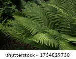 Green Tropical Fern Bush In...