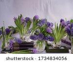 Hyacinth Flowers Abundant...