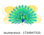 Peacock Flat Colorful Vector...
