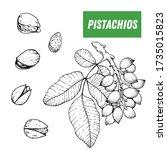 pistachios hand drawn sketch.... | Shutterstock .eps vector #1735015823