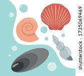 Seashells. Collection Of...