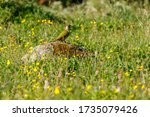 European Green Woodpecker...