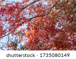 A Colourful Display Of Red And...