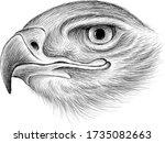 eagle falcon crow bird vector... | Shutterstock .eps vector #1735082663