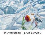 Frozen Red Flower Tulip On...