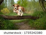 Two Dogs Jumping Togetherbeagl...