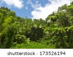 Tropical Rainforest Scenery In...