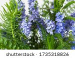 rich green plants and purple... | Shutterstock . vector #1735318826