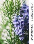 wild blue bells flowers macro... | Shutterstock . vector #1735323410
