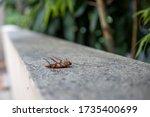 Big Dead Orange Cockroach Lies...