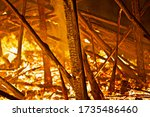 Burning Forest Close Up. Ragin...