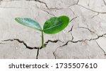 Seedling Of Green Leaf Plant...