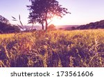 summer meadow | Shutterstock . vector #173561606