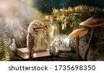 Fantasy Wise Sleeping Owl Is...