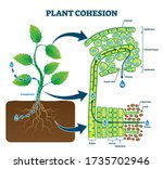 plant cohesion vector... | Shutterstock .eps vector #1735702946