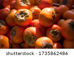 Close Up Fresh Ripe Persimmons...