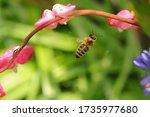 Beautiful Macro From A Bee...