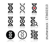 dna  genetics vector icons set | Shutterstock .eps vector #173602313
