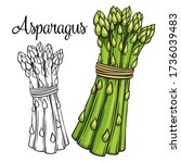 asparagus vector drawing icon.... | Shutterstock .eps vector #1736039483