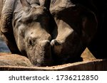 Two Rhinos Having Food In A Zoo