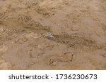 Small Wild Crab On The Beach I...
