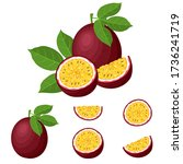 set of fresh whole  half  cut... | Shutterstock .eps vector #1736241719
