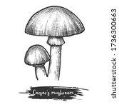 caesars mushroom sketch. vector ... | Shutterstock .eps vector #1736300663
