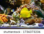 Marine Aquarium Background Wit...