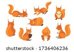 cute red furry squirrel set.... | Shutterstock .eps vector #1736406236