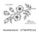 sketch floral botany collection.... | Shutterstock .eps vector #1736493116