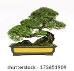 Bonsai Tree  Isolated On White...