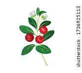 Green Branch Of Lingonberry Or...
