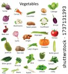a collection of vegetables with ...   Shutterstock . vector #1737131393