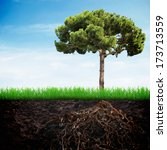 Fir Tree In The Earth With...