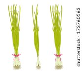 spring onions.  vector... | Shutterstock .eps vector #173760563