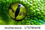 Green Python  Morelia Viridis ...