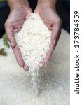 hand holding jasmine rice ... | Shutterstock . vector #173784959