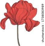 tulip flower. hand drawn botany ... | Shutterstock .eps vector #1738083989