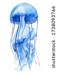 Blue Jellyfish On An Isolated...