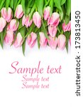 beautiful fresh pink tulips... | Shutterstock . vector #173813450