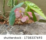 Ist Is Type Of Croton Plant...