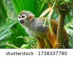 Squirrel Monkey In Jungle Zoo