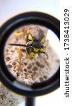 Close Up Of Yellow Wasp Face ...