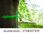 Fluorescent Green Arrow Sign...