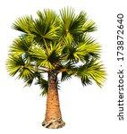 Sugar Palm Tree Isolated On...