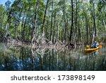 A Pristine Mangrove Forest...