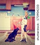 A Pug And A Beagle With...